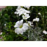 Foto dei utenti Huawei P8 Lite