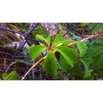 Fotos de usuários Nokia Lumia 520