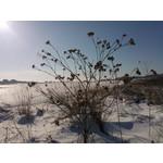 Fotos de usuários Nokia Lumia 800
