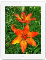 相冊 Apple iPad 4 Wi-Fi 64 GB