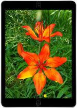 Galeria de fotos do telemóvel Apple iPad 9.7 WiFi 128 GB