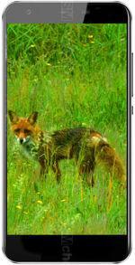 相册 Black Fox B3 Fox