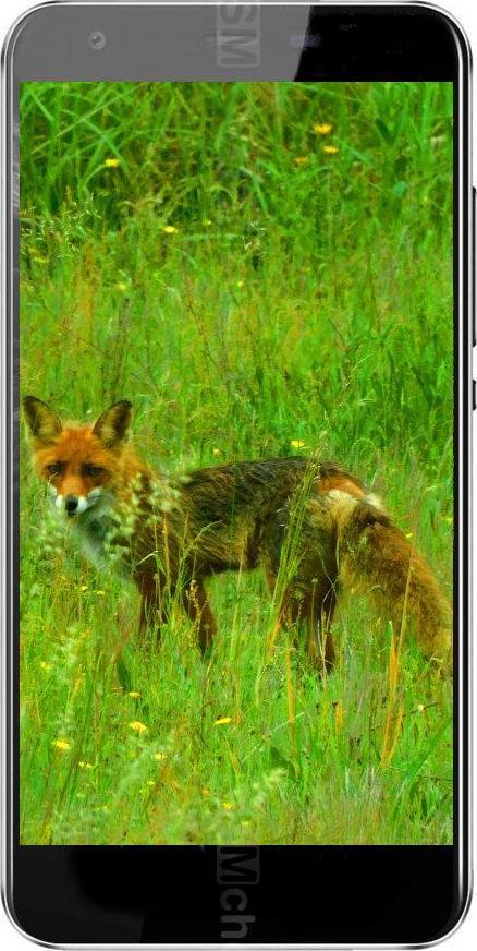 Black Fox B3 Fox+