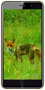 Galleria Foto Black Fox B4 NFC