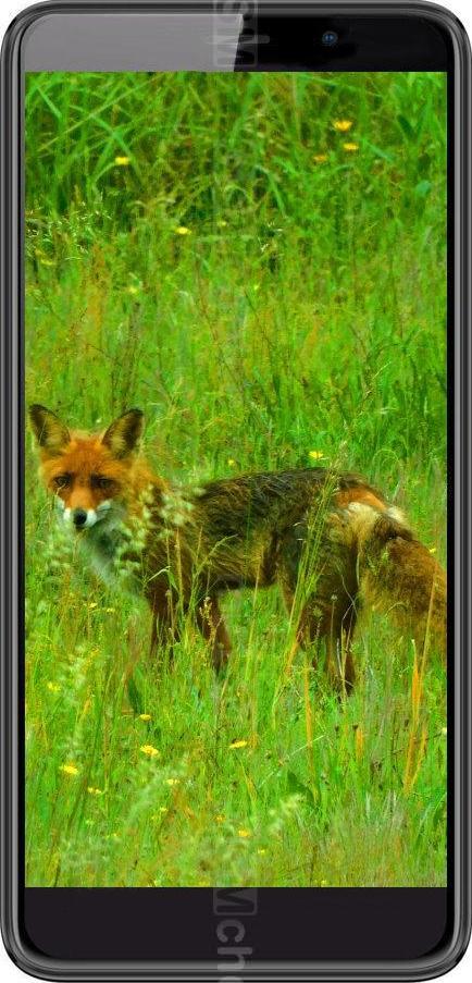 Black Fox B6 Fox
