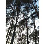 用戶照片 Asus ZenFone Max Pro M2
