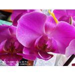 Foto's van de gebruikers Huawei Mate 20 Pro