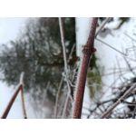 Fotos de usuários LG G6