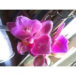Foto's van de gebruikers myPhone Prime Plus