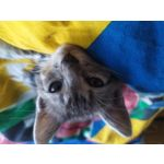 用户照片 Redmi Note 7