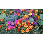 Imágenes de los usuarios Sony Xperia Z1 C6903