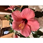 Pictures by this phone Xiaomi Mi 9 Lite